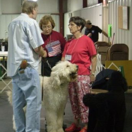 Canine Good Citizen Testing 2007