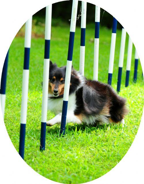Tulsa Dog Training Club