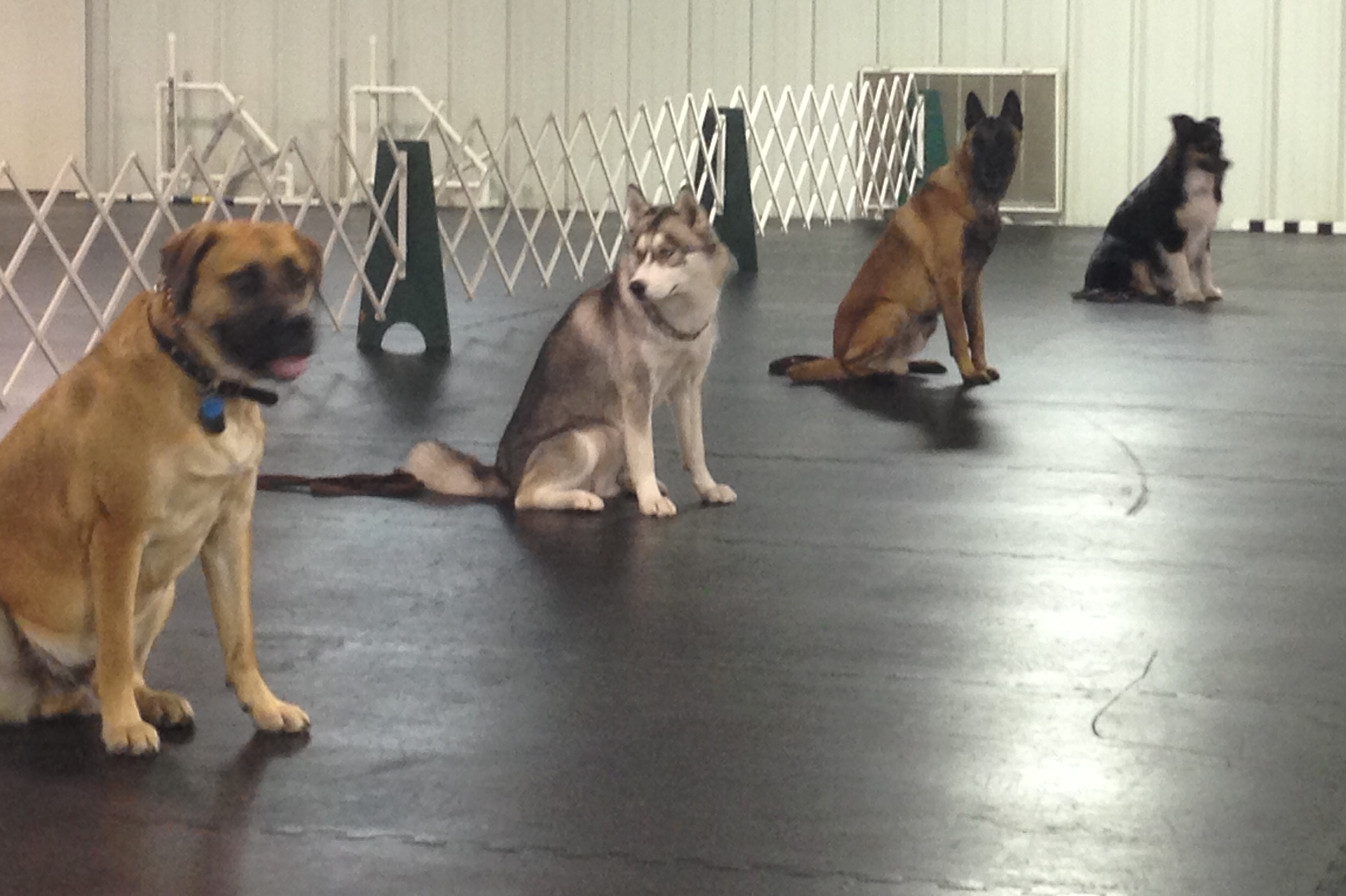 Beginner Obedience, Sit Stay photo by Kyle Rives