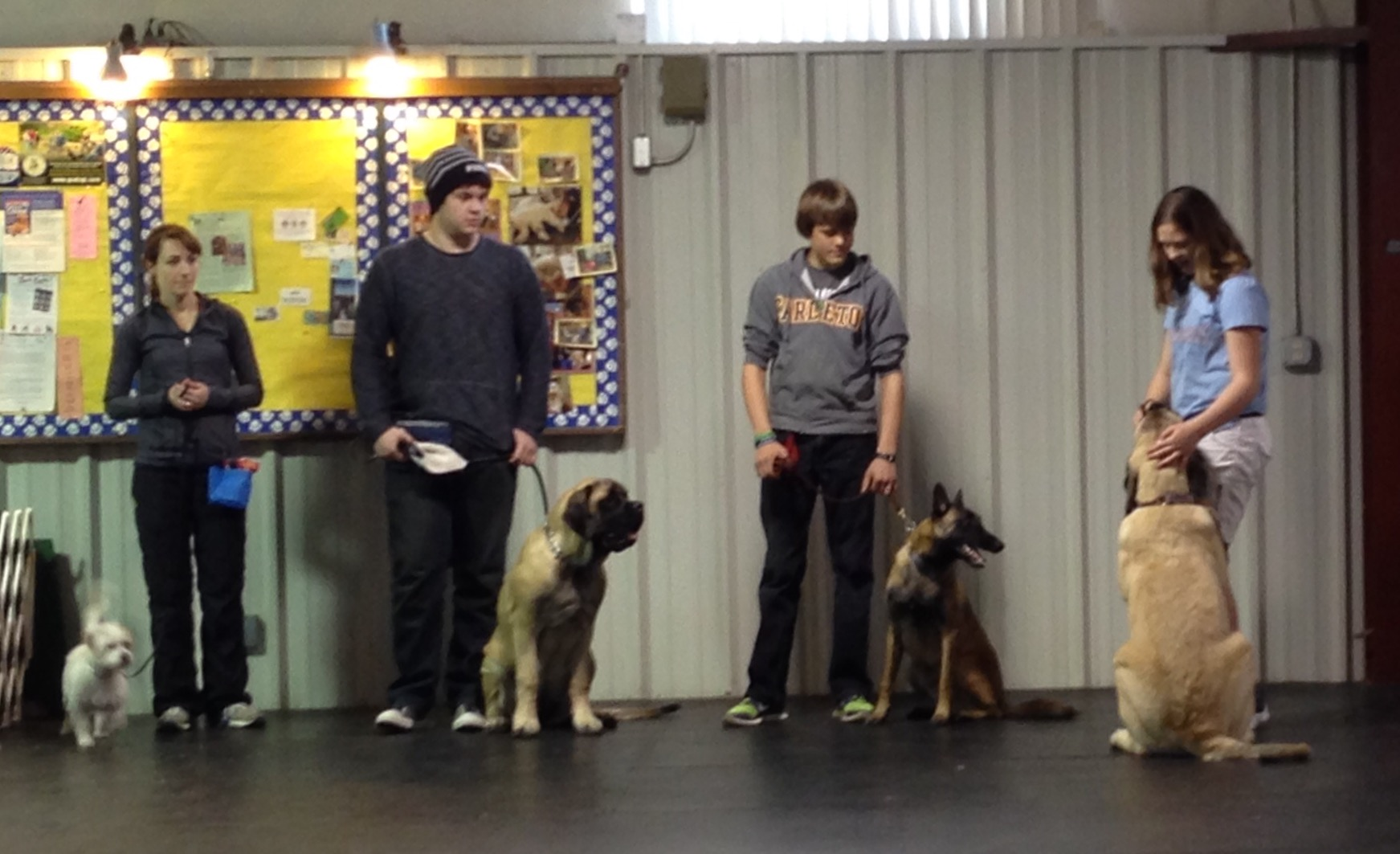 Beginners Obedience photo by Kyle Rives