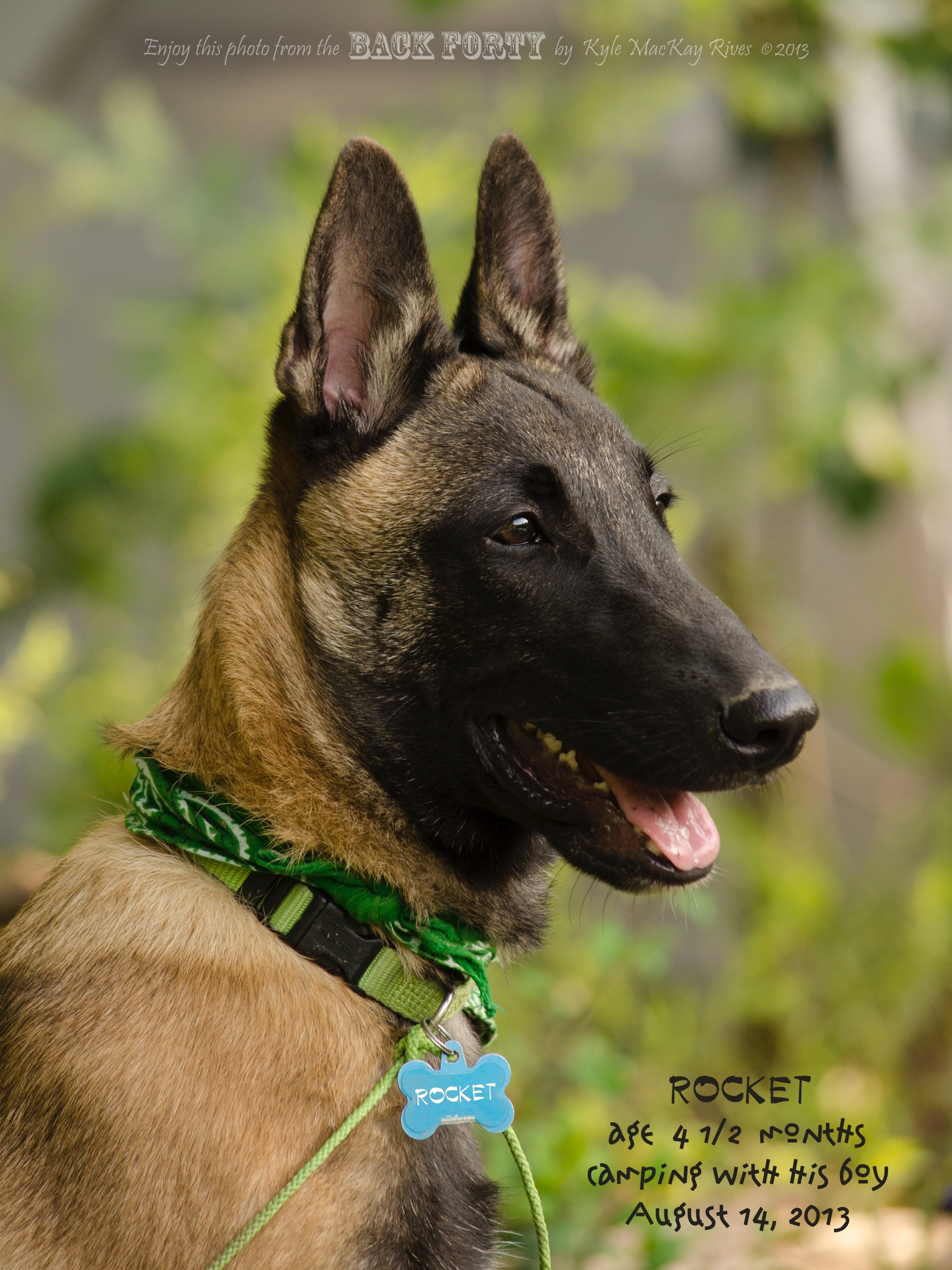 Rocket Belgain Malinois photo by Kyle Rives